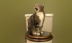 kattenbak.jpg