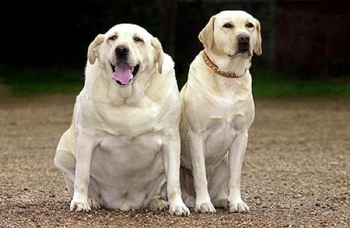 hond-op-dieet.jpg